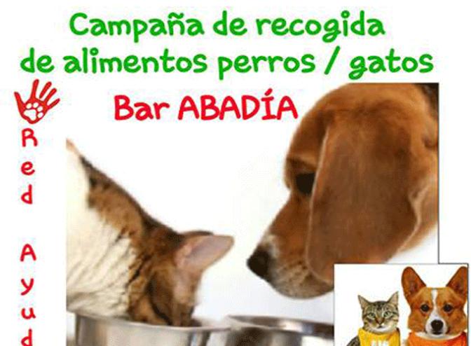 Campaña de recogida de alimentos para perros y gatos