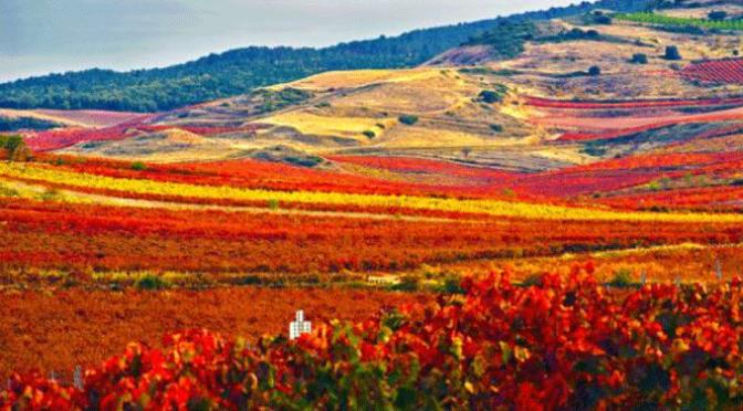X Concurso de Fotografía Medio Ambiente de La Rioja