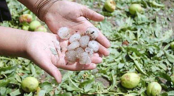 Ayuda a los agricultores riojanos para contratar seguros