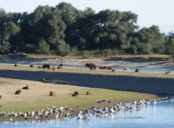 Mañana  paseo guiado por la Reserva Natural de los Sotos de Alfaro