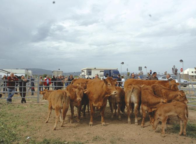 Mañana tradicional  Ferial de ganado equino y el sábado romería