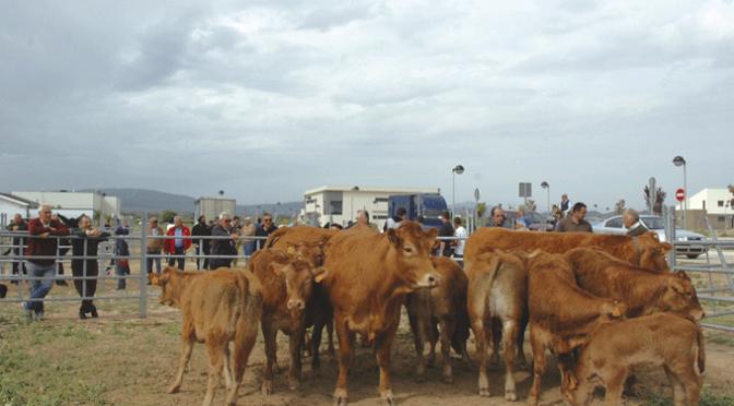 Esta mañana en Rincón de Soto, Gran Ferial de ganado equino