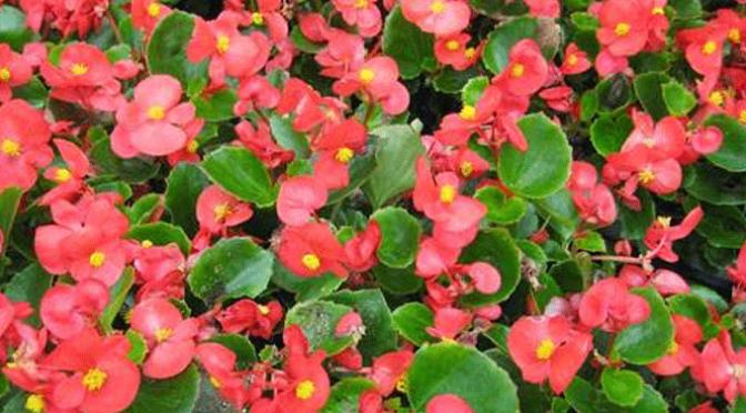 Calahorra plantará 21.548 plantas de flor en la campaña de primavera y verano