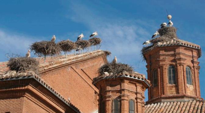 Ayudas para la conservación de nidos de cigüeñas