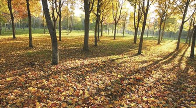 Nos espera un otoño más cálido de lo habitual