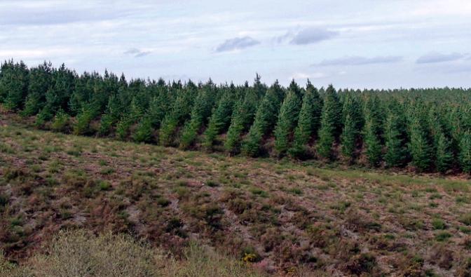 Proyecto de repoblación forestal y mantenimiento de bosques de La Rioja Baja