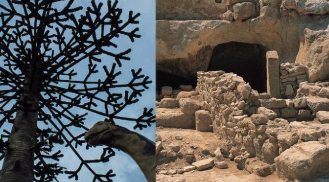 Edición 2018 del Dinobús y el Celtibús para difundir el patrimonio cultural de La Rioja Baja