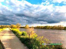 Motarrón del Ebro
