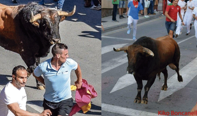 Los encierros de toros de Alfaro, un favorito entre los corredores