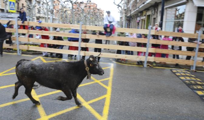Importantes novedades en los encierros de las Fiestas de Marzo en Calahorra