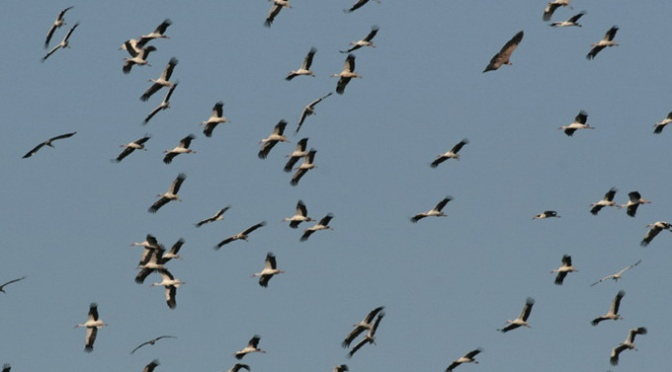 Este fin de semana taller en Alfaro para acercar a los niños la migración de las cigüeñas