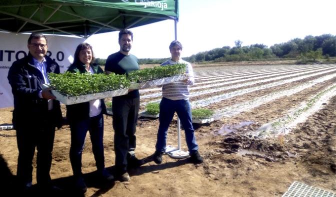 Agritom 2.0, un nuevo proyecto para impulsar el cultivo de tomate