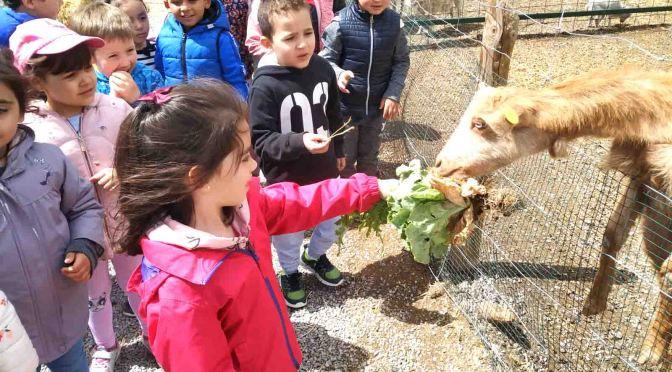 Los alumnos de educación infantil del CEIP Quintiliano de Excursión Granja Escuela