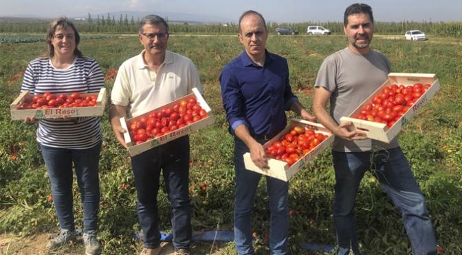 Primera cosecha del Agritom 2.0 para un cultivo mas sostenible y eficiente del tomate