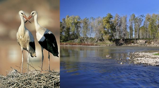 La Reserva Natural de los Sotos de Alfaro organiza actividades con motivo del Día Mundial de los Humedales. Además de San Blas y el Dia de la Cigueña