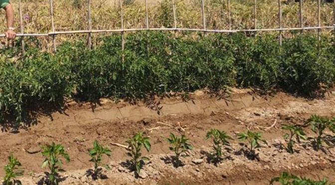 Agricultura contribuirá a identificar las necesidades de contratación del campo ante las campañas en el marco del COVID-19