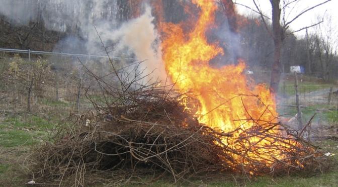 Autorizados las quemas de restos de poda de olivo y de viña por motivos fitosanitarios durante el estado de alarma