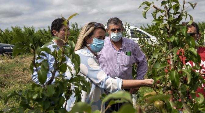 visita de los frutales más afectados por las tormentas de los pasados días en Rincón de Soto