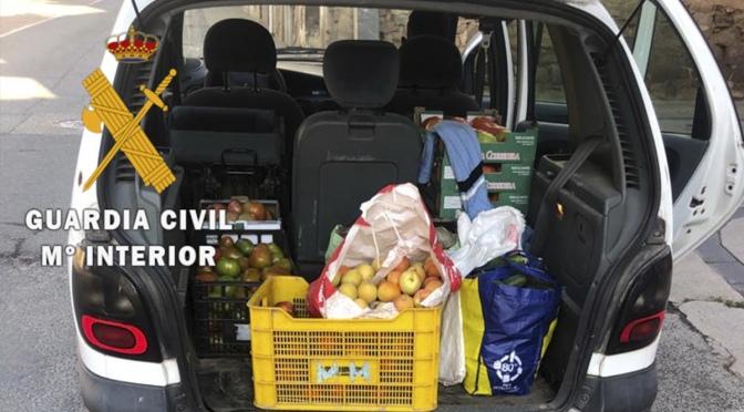 120 kg de verduras y frutas de origen desconocido y sin trazabilidad sanitaria incautadas en Lodosa