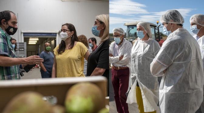 Hita visita Rincón de Soto y Calahorra en la recolección de pera para promover la seguridad en las campañas agrícolas