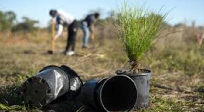 Más de 50 nuevos árboles en Alfaro gracias a los presupuestos participativos