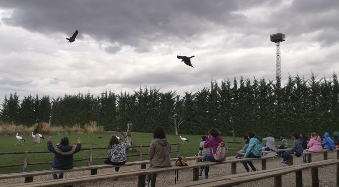 El parque Tierra Rapaz cierra temporalmente hasta el 7 de noviembre