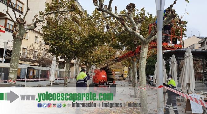 Comienza la poda del arbolado urbano en Calahorra
