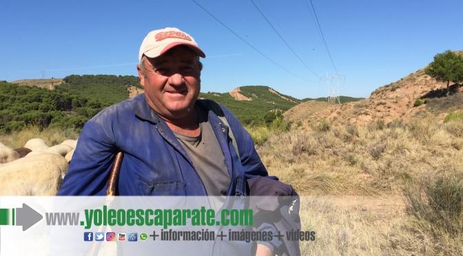 Proyecto pionero en Calahorra para controlar mediante pastoreo la vegetación bajo las líneas eléctricas