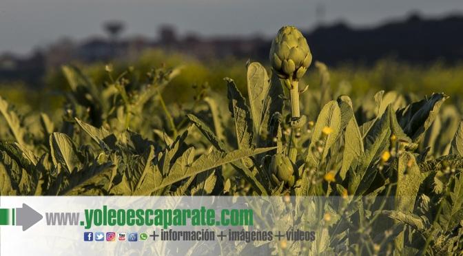 """I Concurso Fotográfico de turismo de naturaleza """"Ciudad de Calahorra"""""""