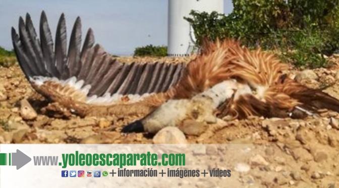 Amigos de la Tierra La Rioja reclaman medidas urgentes frente a la muerte de aves en el parque eólico de Calahorra