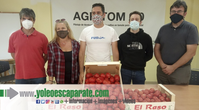 Presentada la cosecha 2021 del proyecto AGRITOM2.0, para impulsar el cultivo del tomate